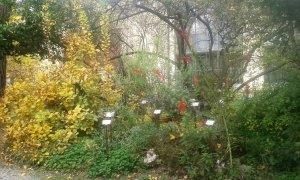 Arboreto e serre (FILEminimizer)