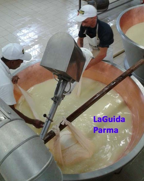 Guided tour of a Parmigiano Reggiano cheese factory
