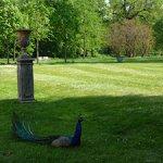 Magnani-Rocca-pavone-nel-parco
